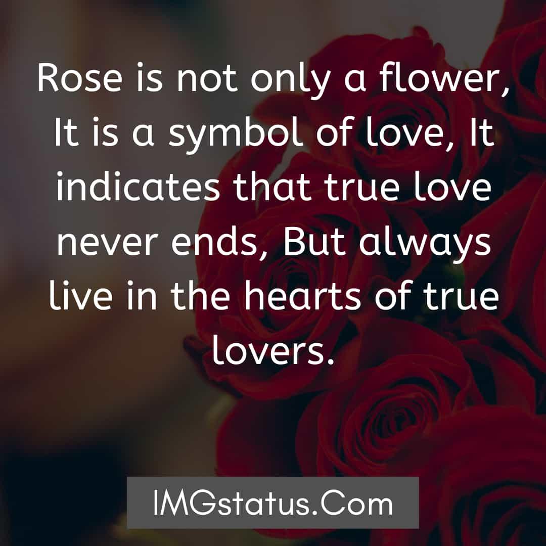 Happy Rose Day Image